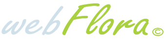 Партнерки разных магазинов - Партнёрская программа по продаже цветов Интернет-магазина Webflora